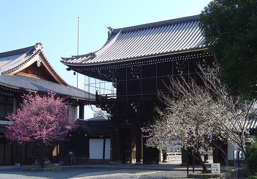 koshojiume2