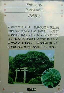 yamamomo_0011