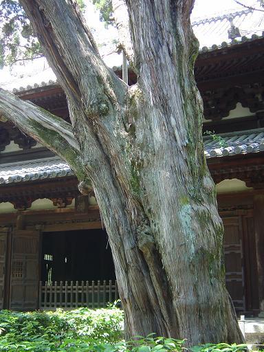 0705daitokuji_0201