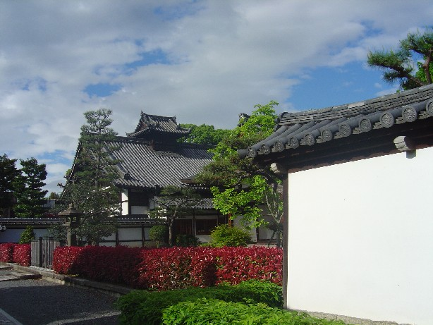 Tutuji_0091